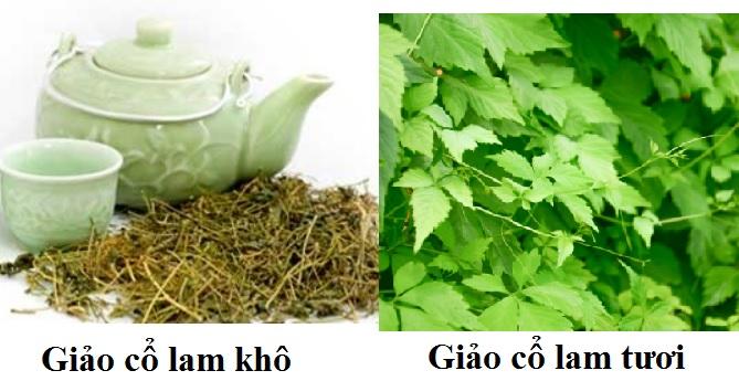 Giảo cổ lam được sử dụng như một loại trà uống hàng ngày