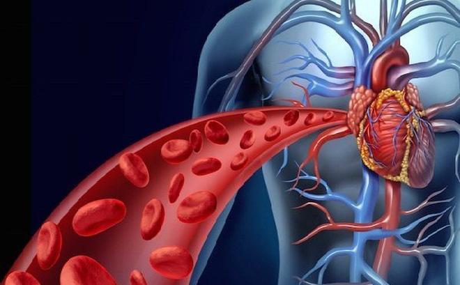Uống giảo cổ lam giảm mỡ máu và máu chảy được tim lưu thông hơn