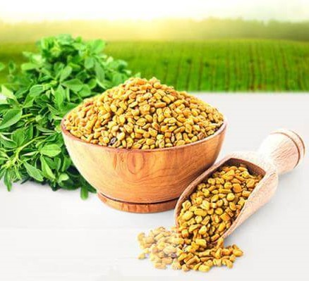 Bạn đã biết hạt methi Ấn Độ mua ở đâu Miền Bắc chưa?